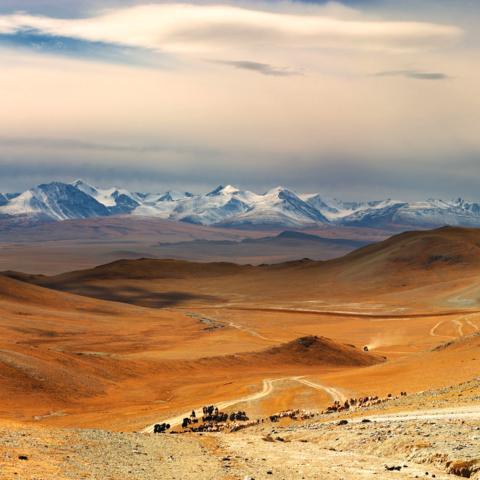 Nomaden treiben Vieh zusammen in weiter Landschaft, Mongolei