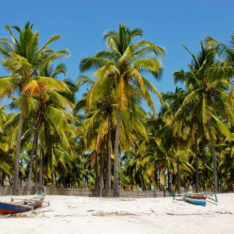 Palmen und palmengesäumte Strände: die Küste Mosambiks, Pangane Beach, Mosambik