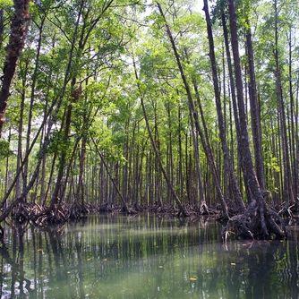 Mangrovenwald im Lampi-Nationalpark, Myanmar