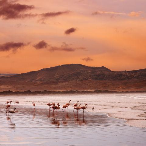 Flamingos am Strand am Atlantik, Namibia
