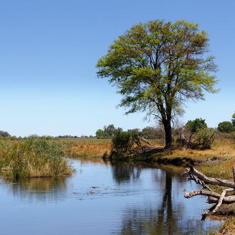 Grüne Landschaft im Caprivi-Streifen, Namibia