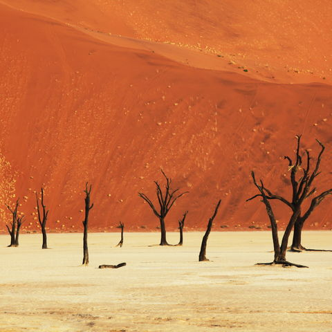 Tote Bäume im Deadvlei, Namibia