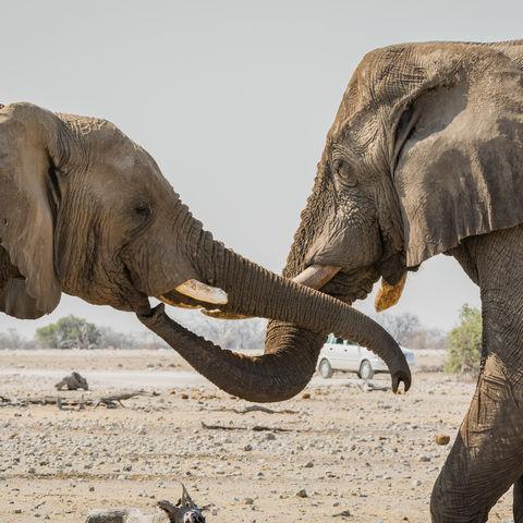 Elefanten am Wasserloch Klein Namutoni im Etosha Nationalpark, Namibia