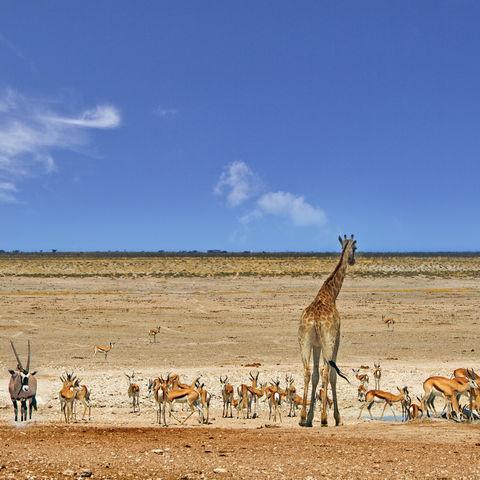 Verschiedene Tiere an der Wasserstelle im Etosha-Nationalpark, Namibia