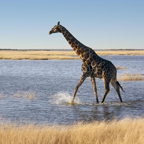 Ein erfrischendes Fußbad, Namibia