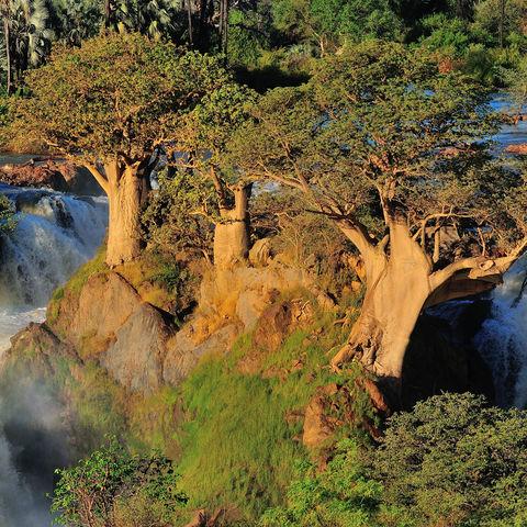 Baobab-Bäume an den Epupa-Fällen, Namibia