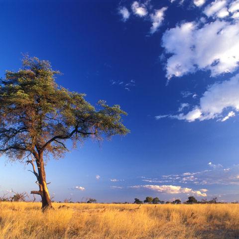 Idyllische Savannenlandschaft, Namibia
