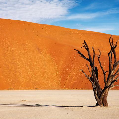 Abgestorbener Baum im Deadvlei bei Sossusvlei, Namibia