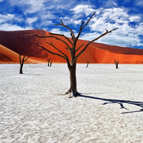 Toter Kameldorn im Deadvlei, Namib Naukluft National Park, Namibia