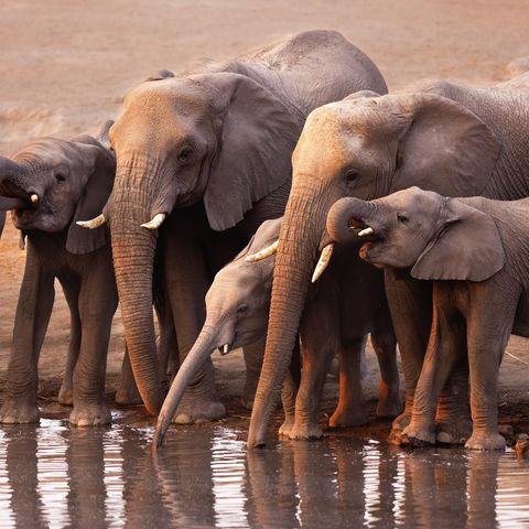 Elefantenherde am Wasserloch, Namibia