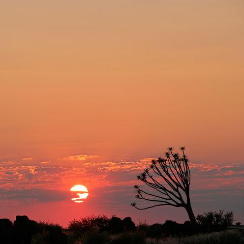 Bebenbaum & Wüstensonnenuntergang, Namibia