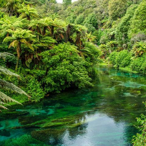 Blue Spring, Hamilton, Neuseeland