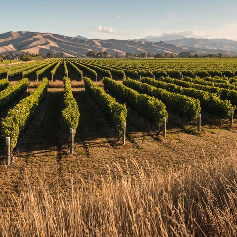 Weingut in der Marlborough-Ebene, Neuseeland