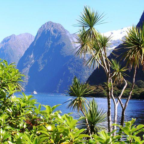 Üppige Vegetation am Milford Sound, Neuseeland