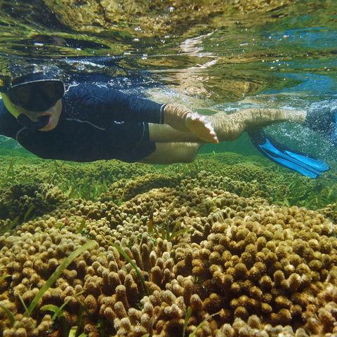 Schnorcheln im Korallenriff von Bocas del Toro, Panama