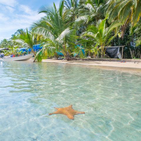 Der Strand der Seesterne: Starfish Beach, Bocas del Toro, Panama
