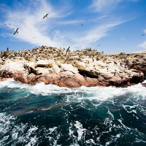 Tierreiche Islas Ballestas, Peru