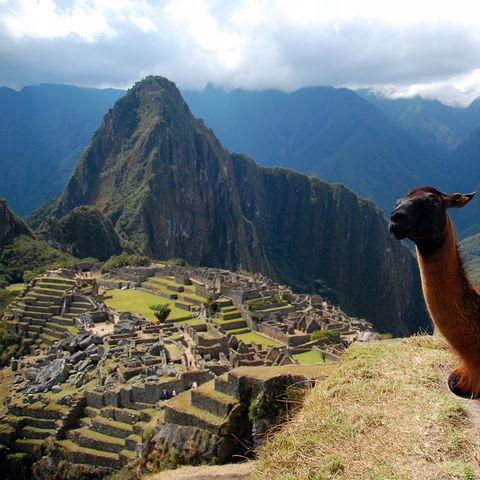 Ein Lama entspannt mit der Aussicht auf die Inkastadt Machu Picchu, Peru