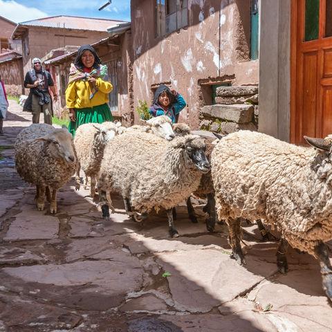 Schafe auf der Insel Taquile, Titicacasee, Peru
