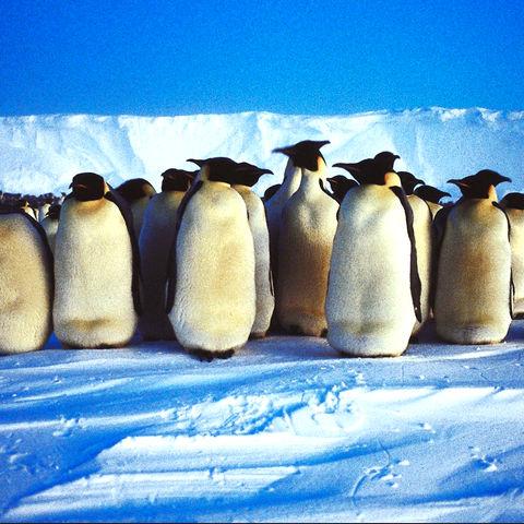 Gemeinsam schaffen wir alles! @ Thinkstock, AbleStock.com, Getty Images, Antarktis