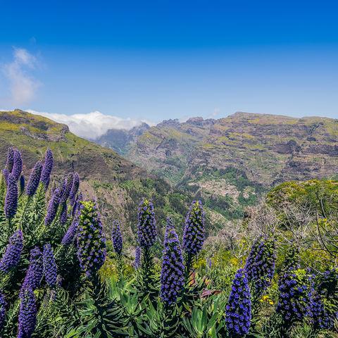 Beeindruckende Landschaft @Francisco Correia, Madeira
