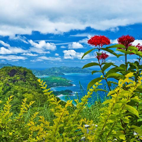 Tropische Vegetation, Seychellen
