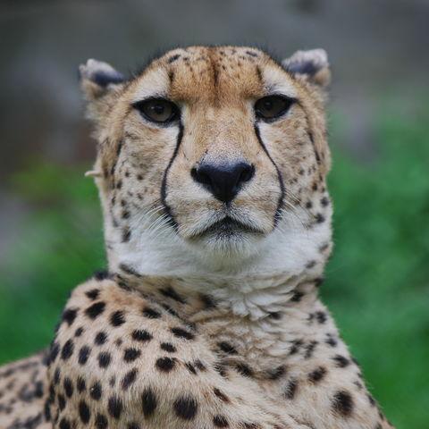 Safari durchs südliche Afrika