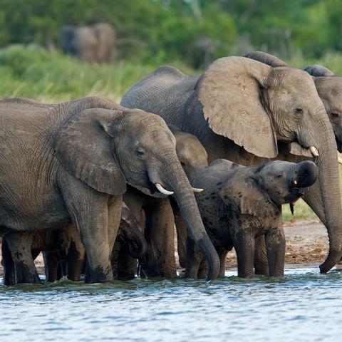 Elefantenherde am Wasserloch, Simbabwe