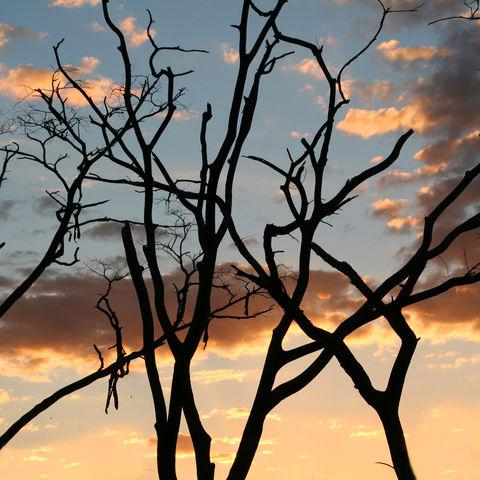 Sonnenuntergang hinter Bäumen, Simbabwe