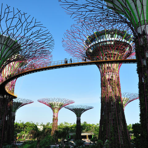 Bäume aus Stahl: Gardens by the Bay, Singapur