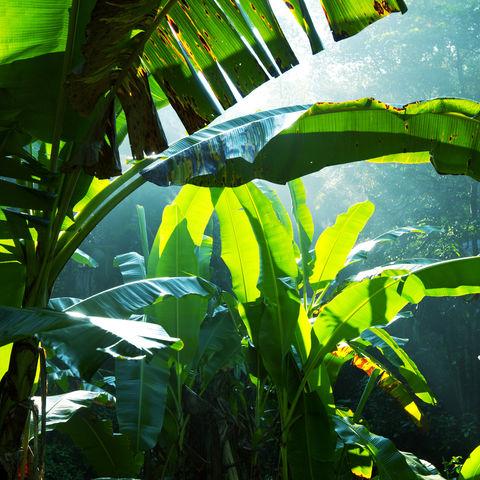 Grüner Dschungel, Sri Lanka
