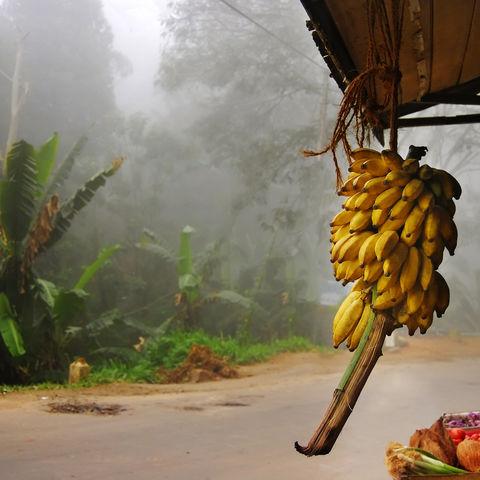 Ein Marktstand in der nähe von Ella, Sri Lanka