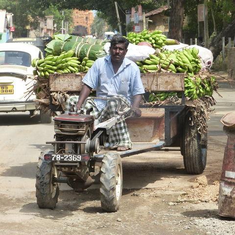 Traktor mit Bananen in Jaffna, Sri Lanka