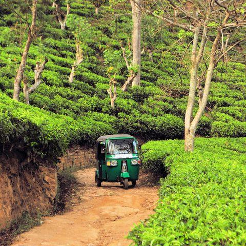 Im Tuk Tuk durch Teefelder, Sri Lanka