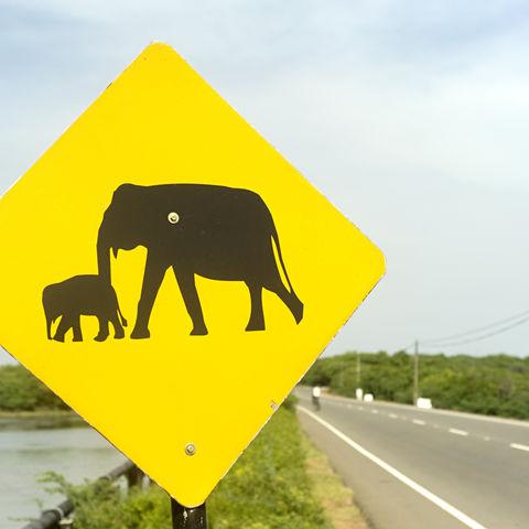 Vorsicht Elefanten!, Sri Lanka