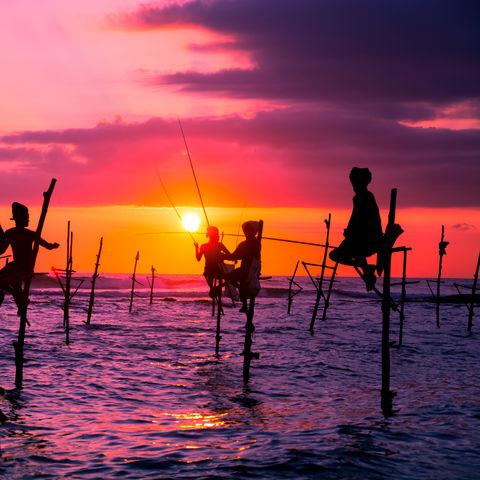 Die traditionellen Stelzenfischer während des Sonnenuntergangs, Sri Lanka