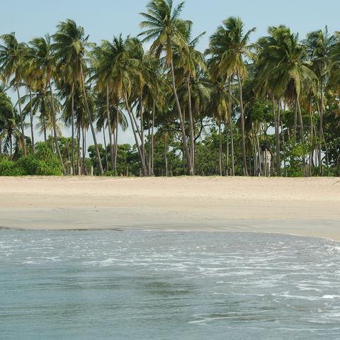 Palmen am Strand bei Trincomalee, Sri Lanka