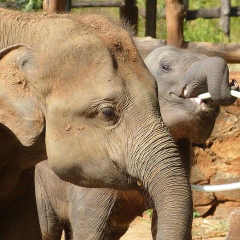 Fütterung der Elefantenwaisen, Sri Lanka