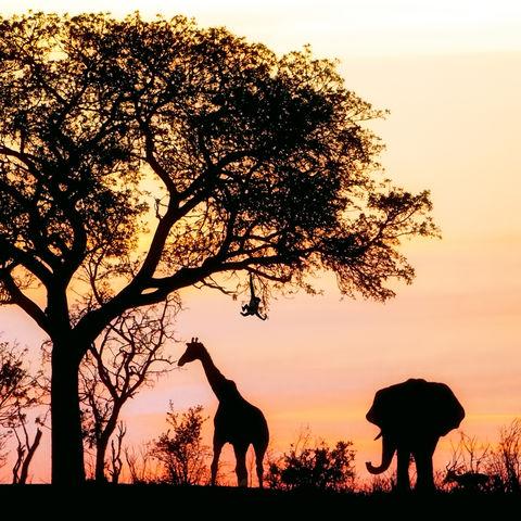 Panoramasicht auf Safari bei Sonnenuntergang © Adogslifephoto, Dreamstime.com