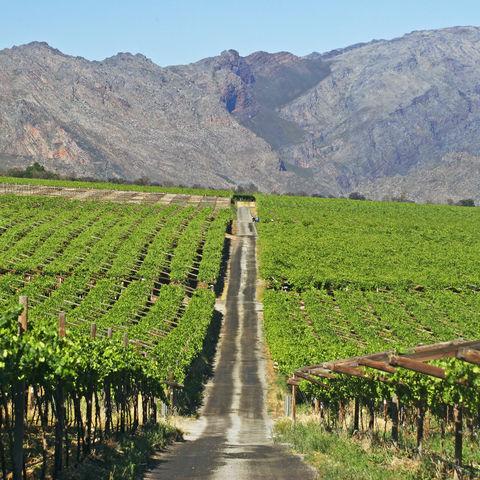Weinfarm im Hex Valley, Südafrika