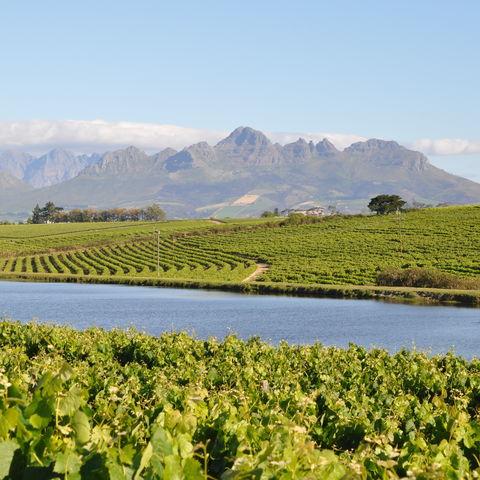 Fruchtbares Weinbaugebiet bei Stellenbosch, Südafrika