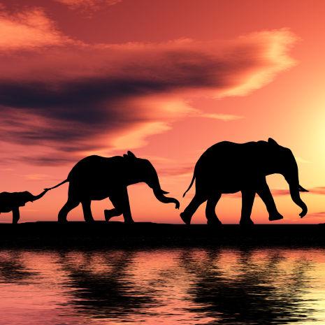 Silhouette einer Elefantenfamilie, Südafrika