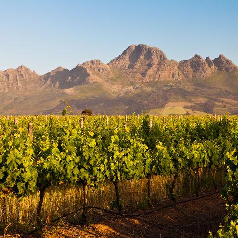 Weinbaugebiet in den Bergen bei Stellenbosch, Südafrika