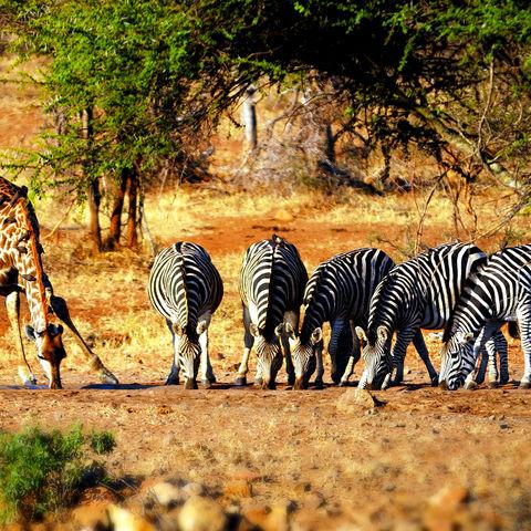 Trubel am Wasserloch, Südafrika