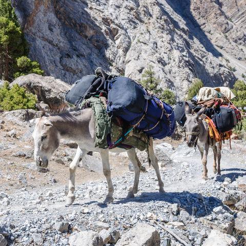 Die Karawane zieht weiter: Esel-Karawane in den Fan Bergen, Tadschikistan