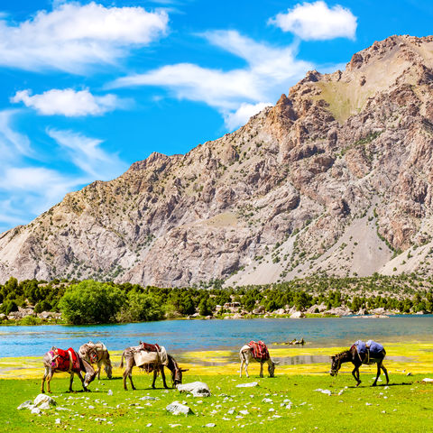 Grasende Esel an einem See in den Fan Bergen, Tadschikistan