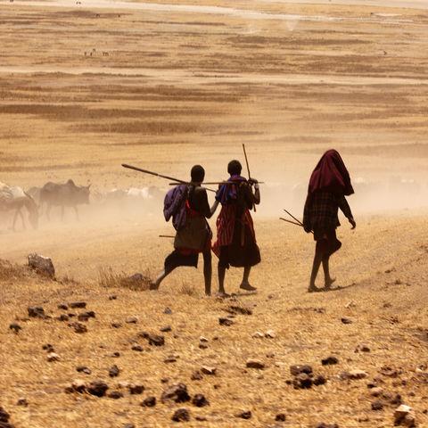 Junge Massai bringen ihre Rinder zum Wasser, Tansania