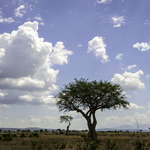 Landschaft im Mikumi-Nationalpark, Tansania