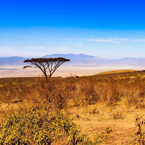 Der Ngorongoro Krater © Henricus Holtslag, Dreamstime.com