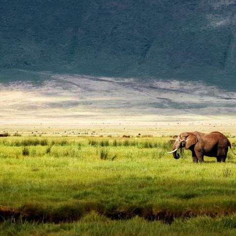 Elefant und viele andere Tiere im Ngorongoro-Krater, Tansania